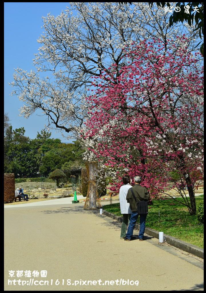 京都植物園DSC_9508