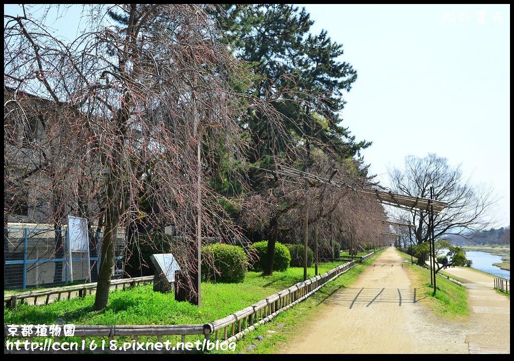京都植物園DSC_9514