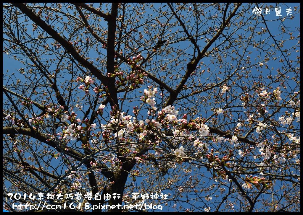 平野神社DSC_9556