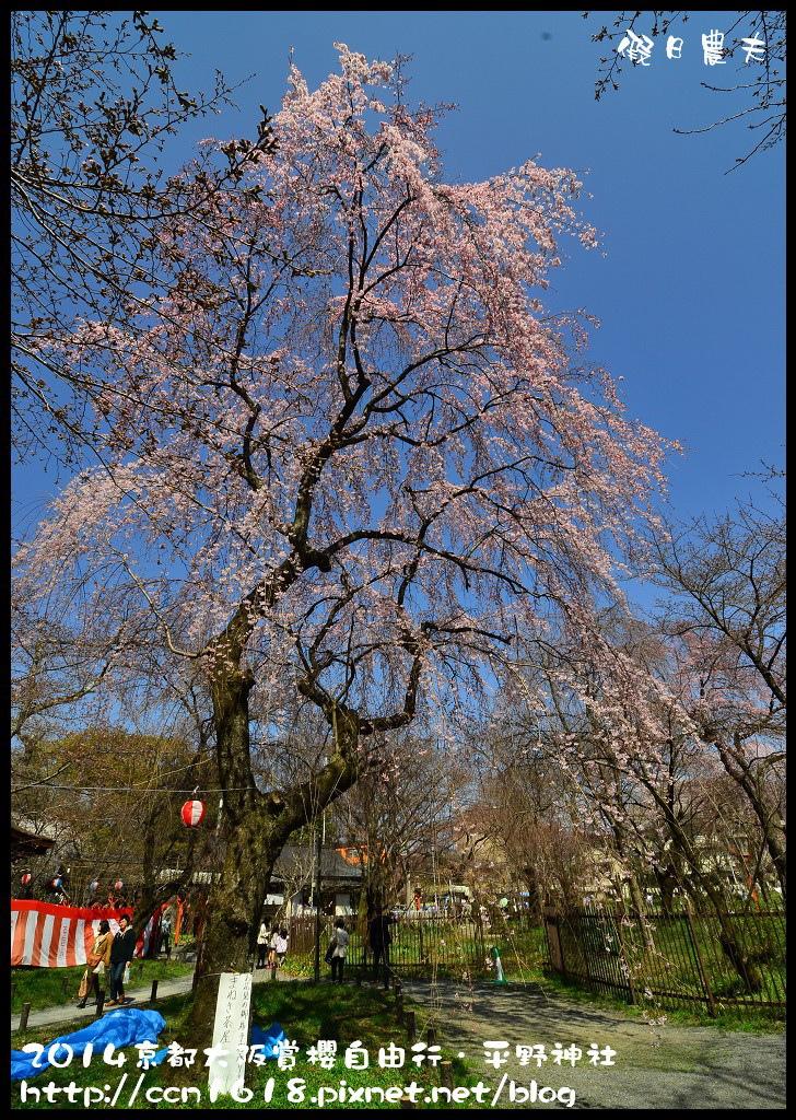平野神社DSC_9566
