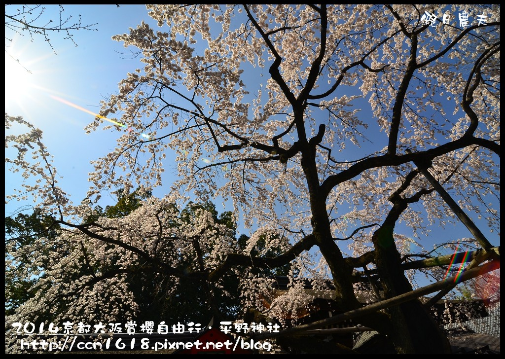 平野神社DSC_9571