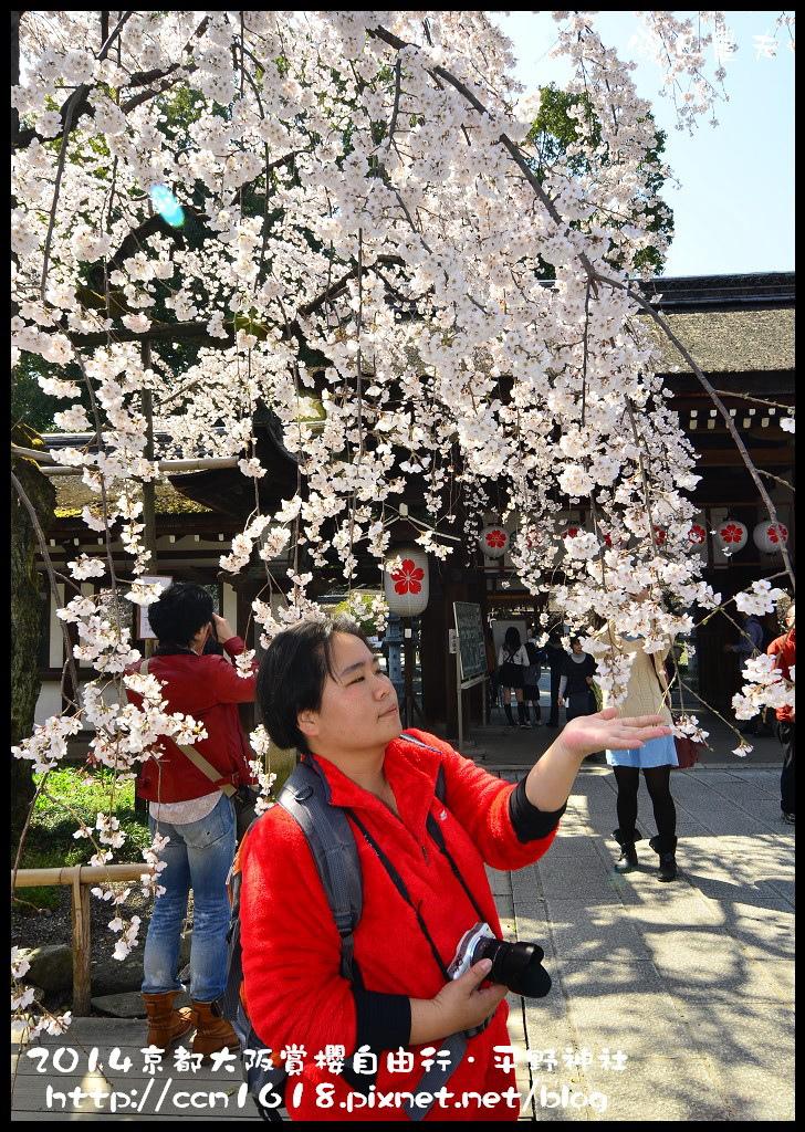 平野神社DSC_9577
