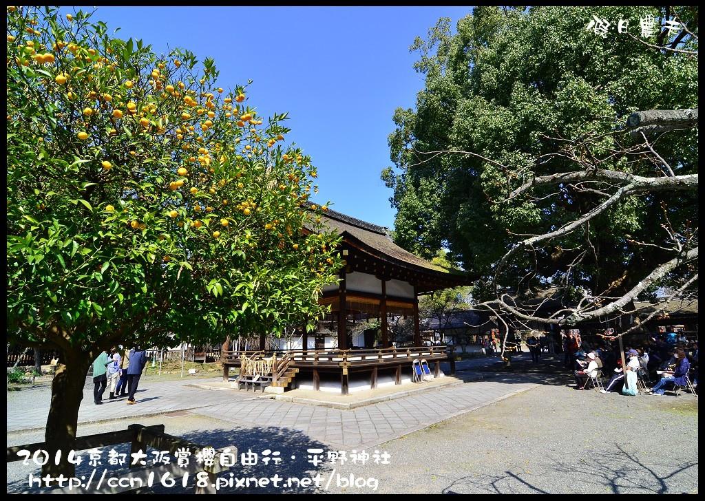 平野神社DSC_9598