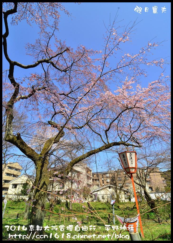 平野神社DSC_9650