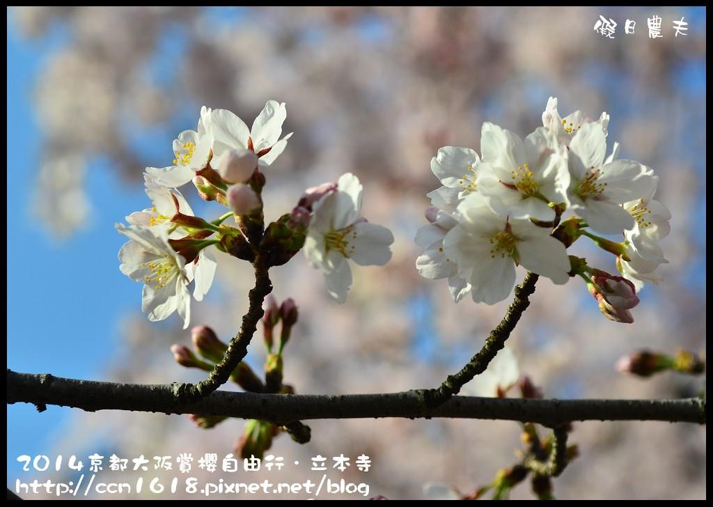 立本寺DSC_9723