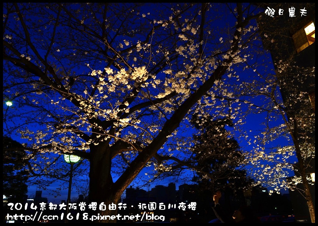 祇園白川夜櫻DSC_9822