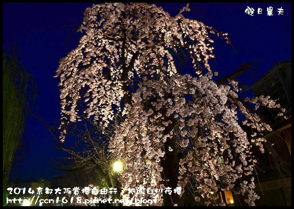 祇園白川夜櫻DSC_9841