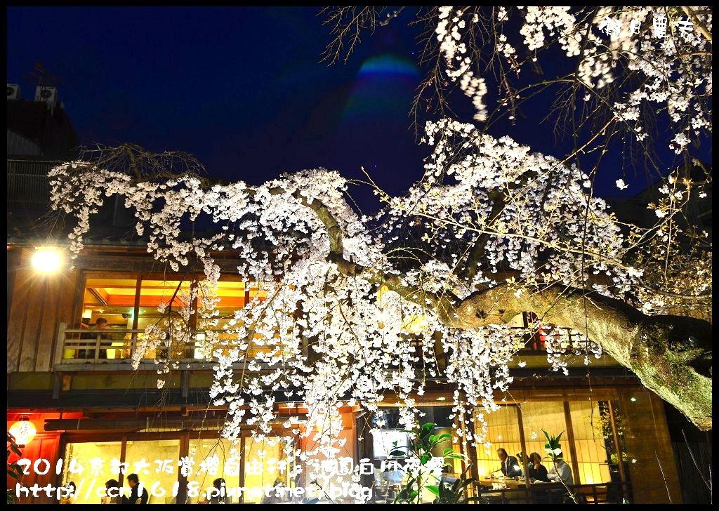 祇園白川夜櫻DSC_9848