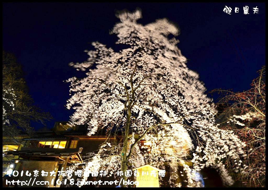 祇園白川夜櫻DSC_9858