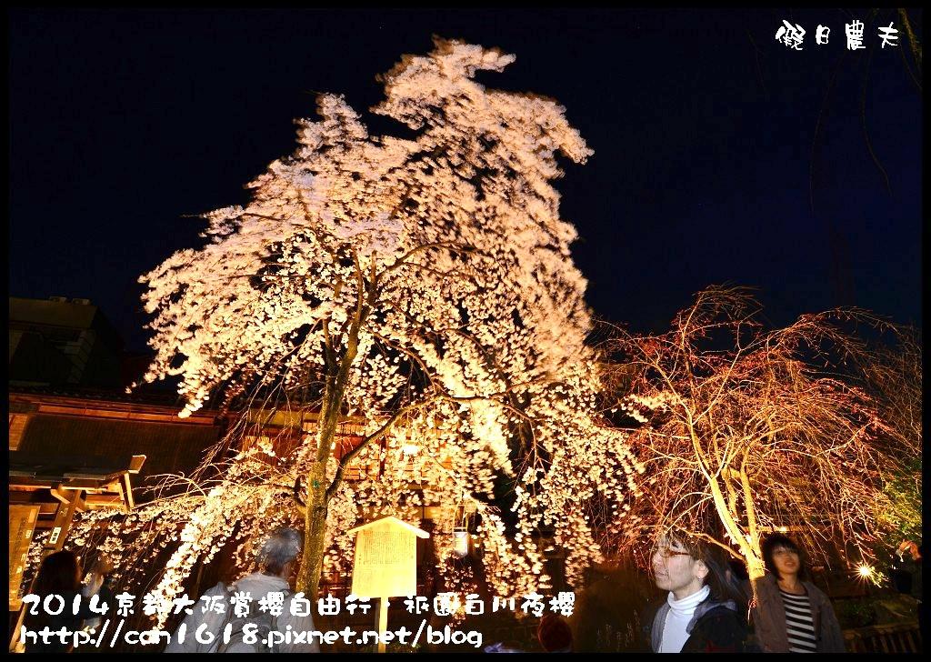祇園白川夜櫻DSC_9863