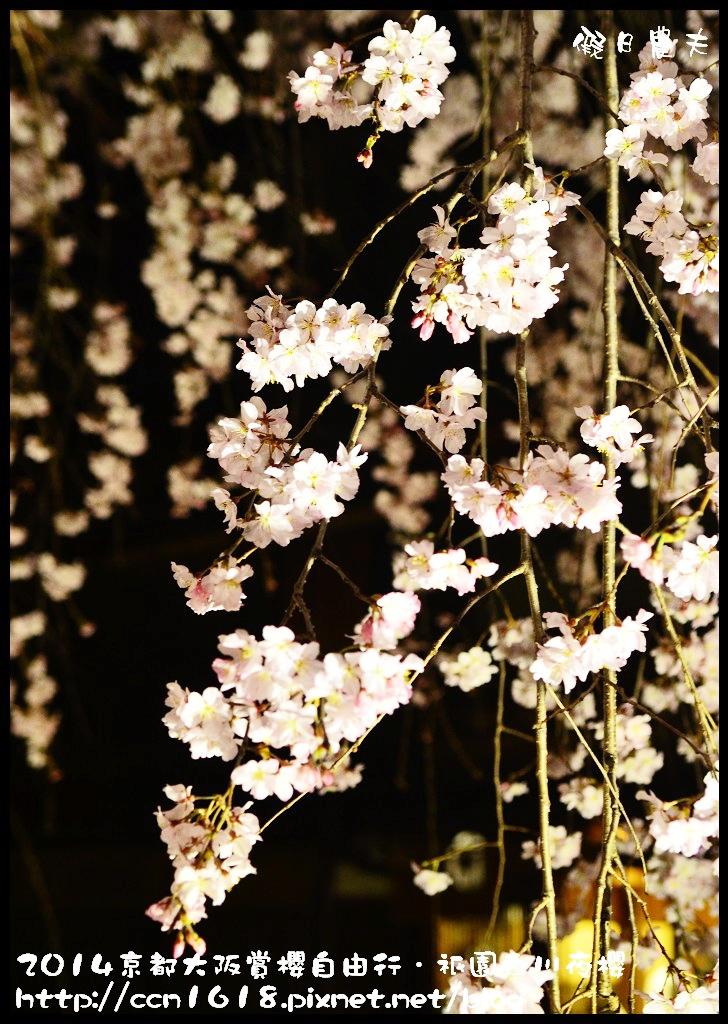 祇園白川夜櫻DSC_9883