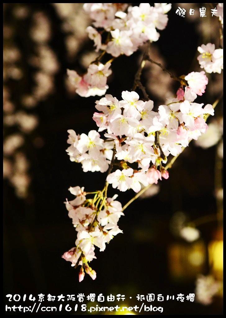 祇園白川夜櫻DSC_9885