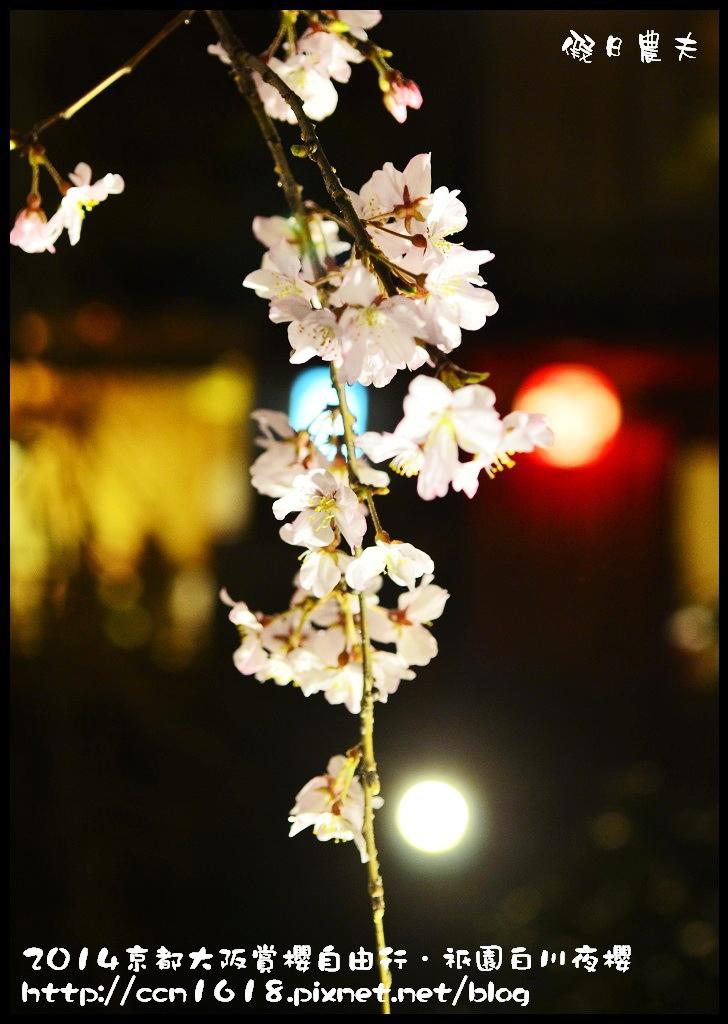 祇園白川夜櫻DSC_9887