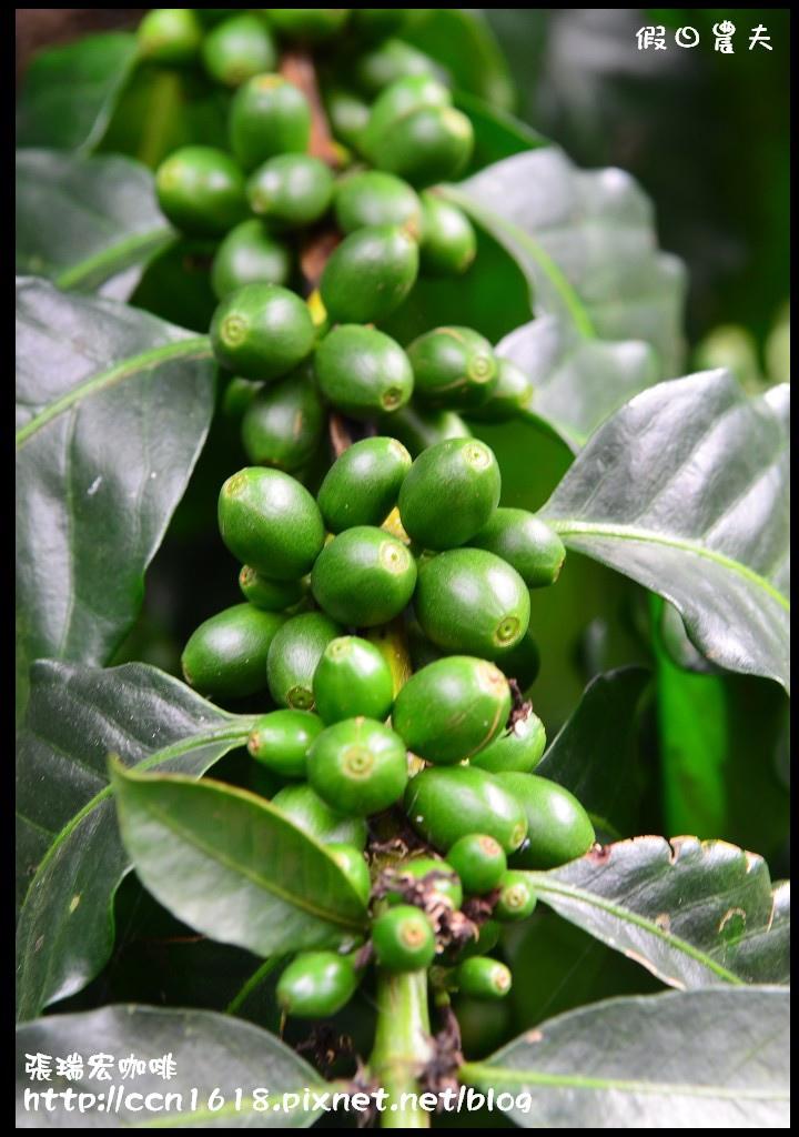 張瑞宏咖啡DSC_0042