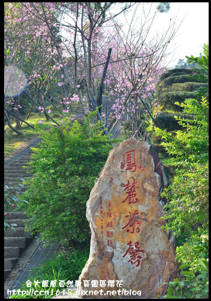 台大鳳凰自然教育園區櫻花DSC_6153
