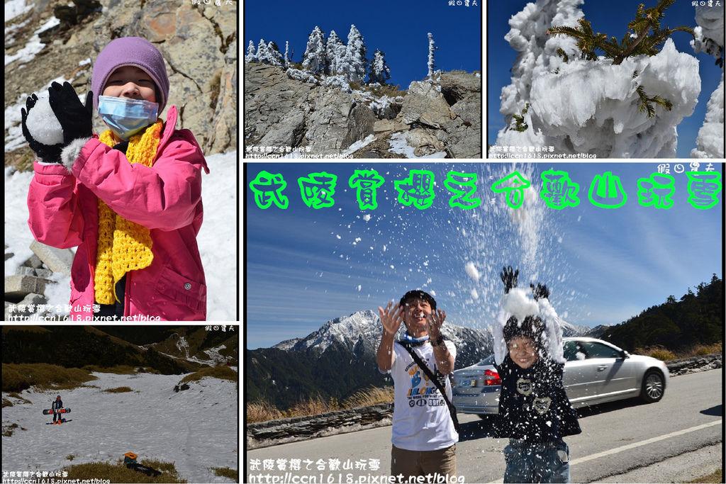 武陵賞櫻之合歡山玩雪