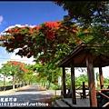 溪州綠筍路鳳凰花道DSC_8886
