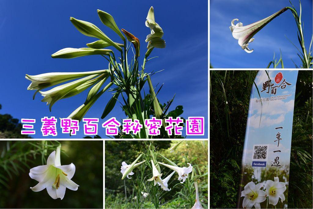 三義野百合秘密花園.jpg