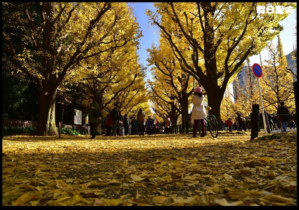 東京銀杏_DSC4992.jpg