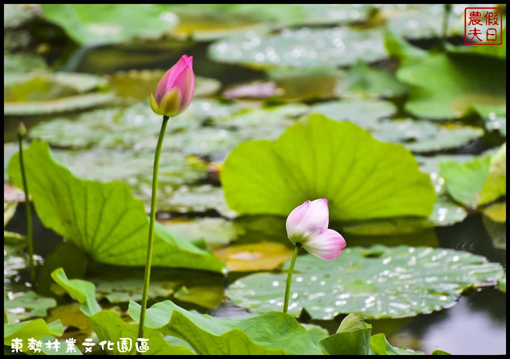 東勢林業文化園區DSC_1445.jpg