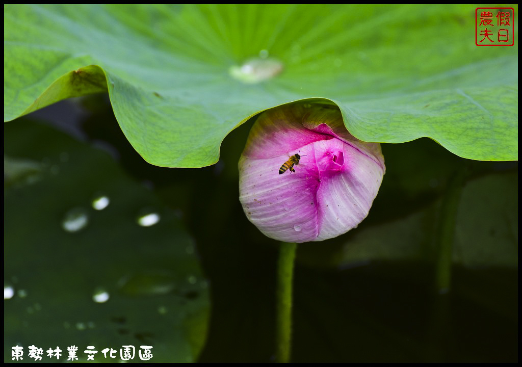 東勢林業文化園區DSC_1481.jpg