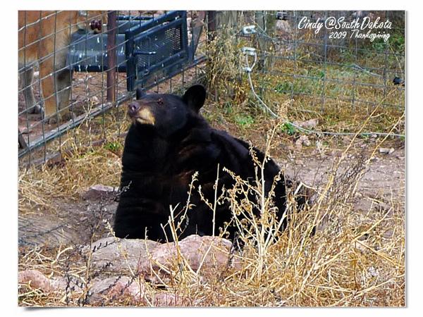 Bear Country-09-Black Baer.jpg