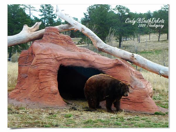 Bear Country-10-Black Baer.jpg