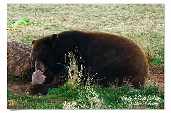 Bear Country-11-Black Baer.jpg