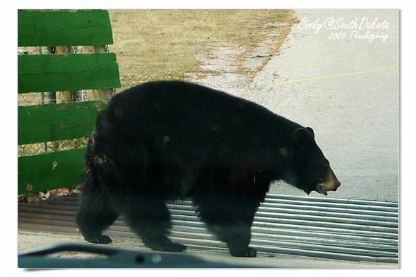 Bear Country-12-Black Baer.jpg