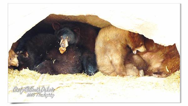 Bear Country-18.jpg