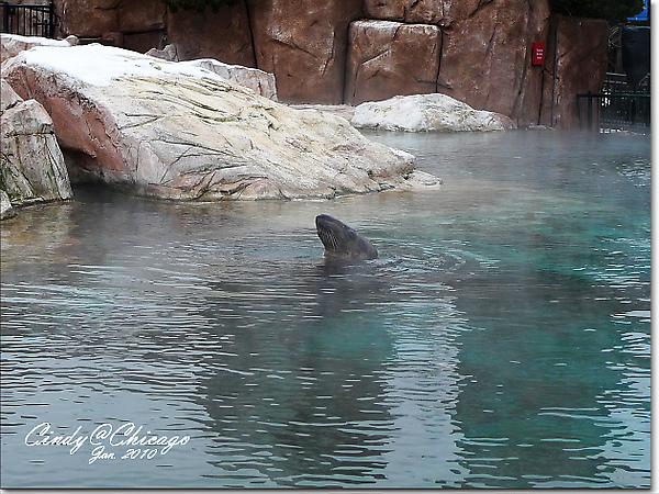 Lincoln Park Zoo-05.jpg