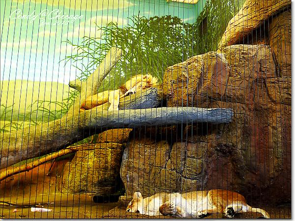 Lincoln Park Zoo-08.jpg