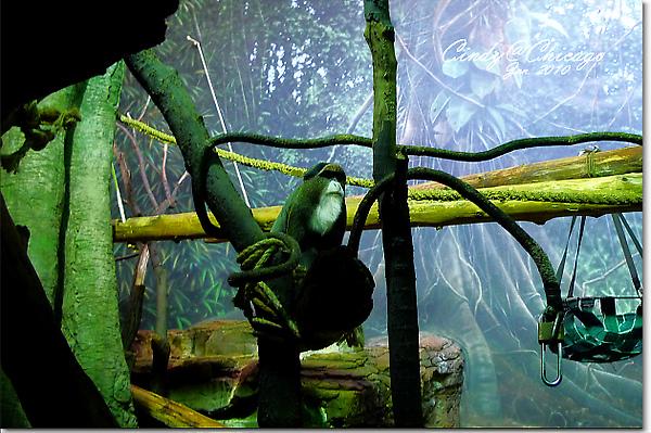 Lincoln Park Zoo-11.jpg