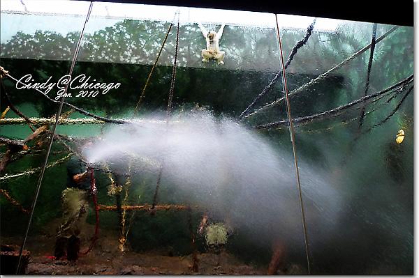 Lincoln Park Zoo-12.jpg