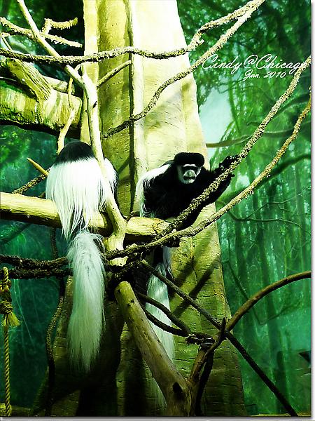 Lincoln Park Zoo-13.jpg