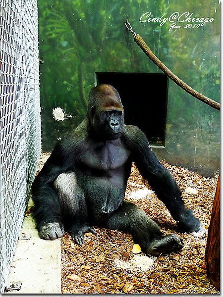 Lincoln Park Zoo-16.jpg