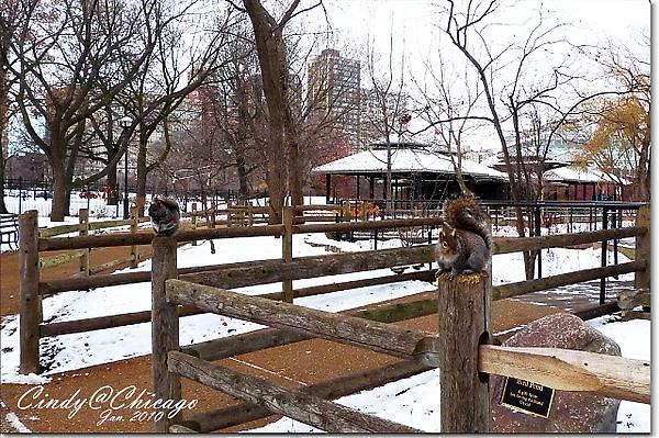 Lincoln Park Zoo-17.jpg