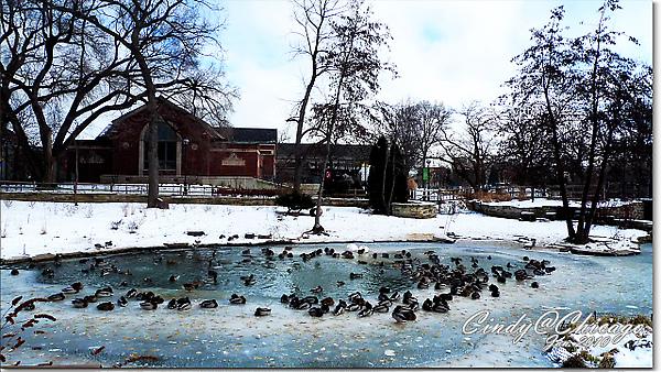 Lincoln Park Zoo-18.jpg