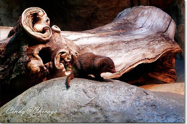 Lincoln Park Zoo-22.jpg