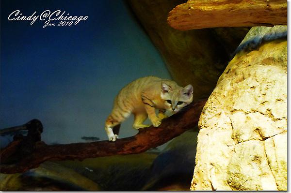 Lincoln Park Zoo-23.jpg