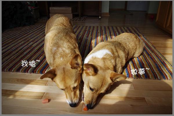 紅蘿蔔爭奪戰-06.jpg