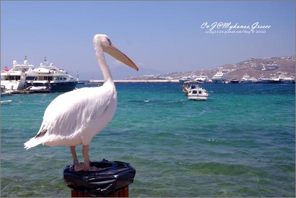 2010-Greece-Mykonos-舊港-29.jpg