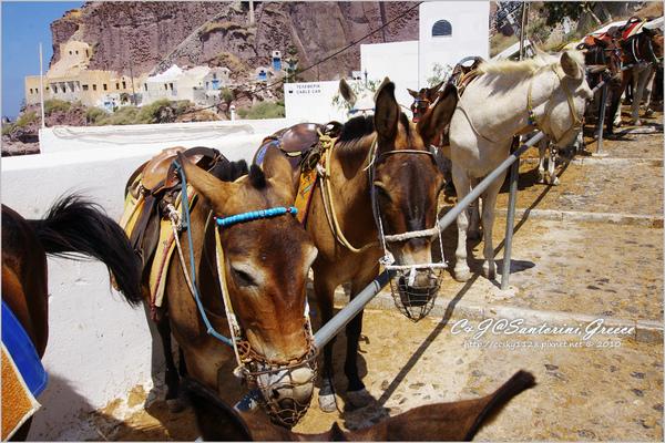 2010-Greece-Santorini-騎驢-09.jpg