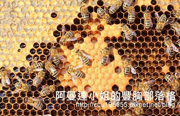 蜂王乳蜂皇漿豐胸食材.jpg