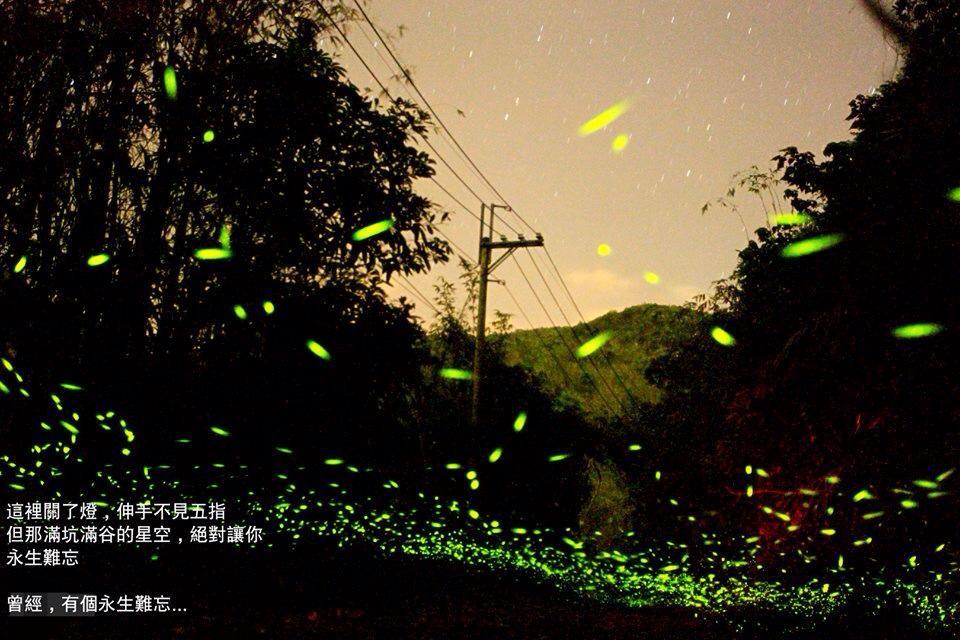 西阿里關螢火蟲