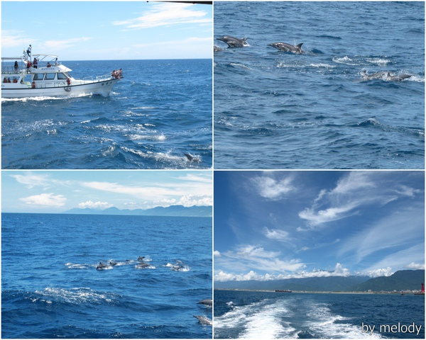 0715賞鯨1.jpg