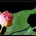 ss-2006_0712_R01.jpg