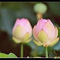 ss-2006_0712_R02.jpg