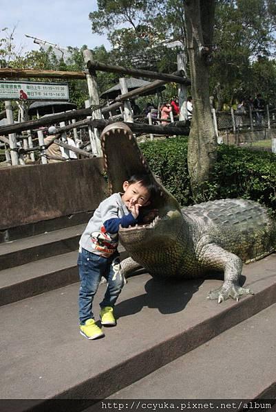 鱷魚吃小鐵