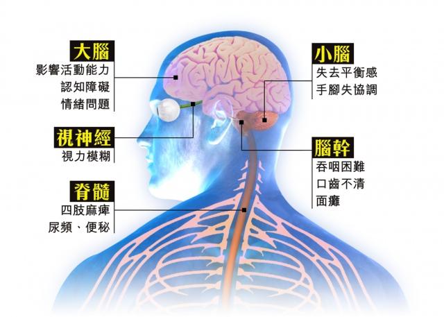 中樞神經2.jpg